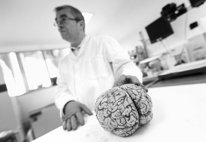 BRAIN SCIENCES_MS brain